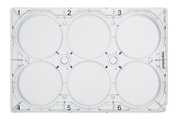 Image – CCCadvanced FN1 Plate 6-well white background