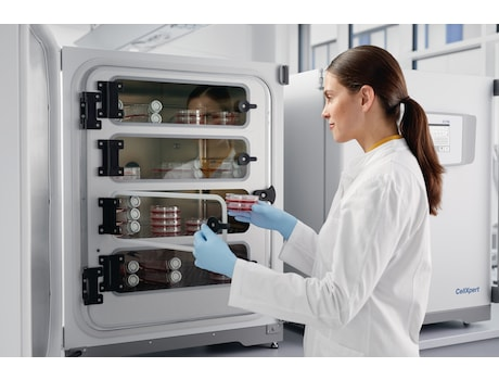 Lab technician with cell culture incubator CellXpert<sup>&reg;</sup> filled with cell culture plates and flasks